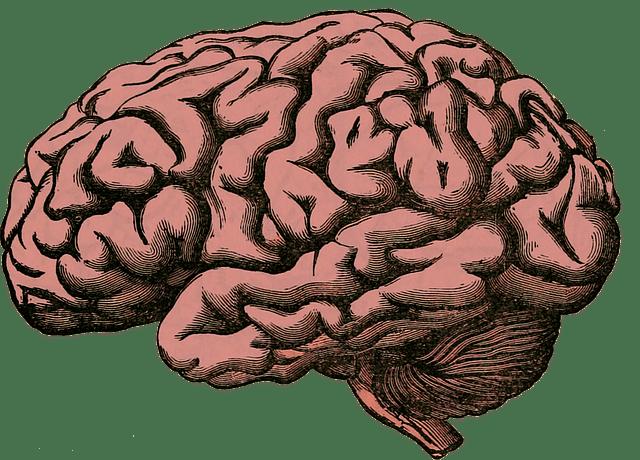human brain nootrpoics 101