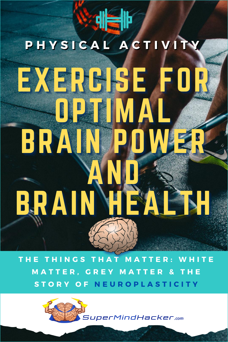 physical exercise brain function
