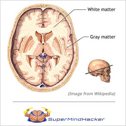 white matter brain