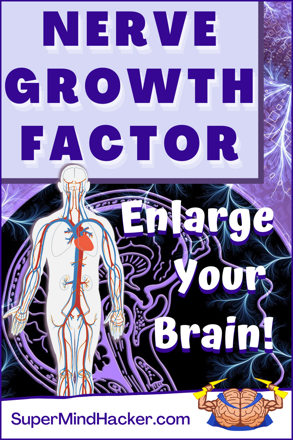 NGF Nerve Growth Factor