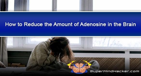 How to Reduce the Amount of Adenosine in the Brain (Caffeine + Alternatives)