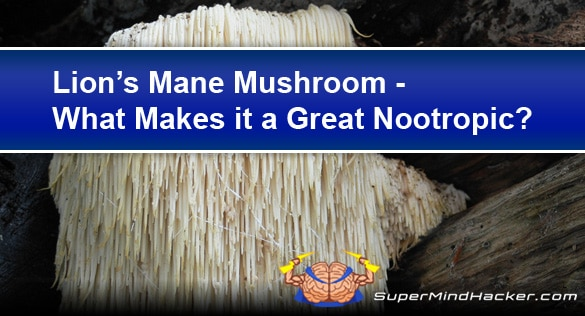 Lion's Mane Mushroom, What Makes it Such a Great Nootropic Ingredient?